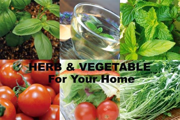 野菜ハーブ栽培