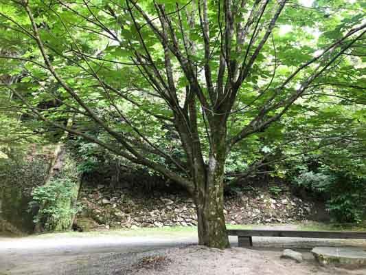 展示室の前には、緑鮮やかな大きな橡の木が!